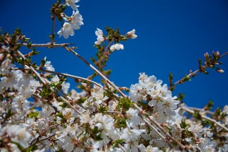 spring-travel-10
