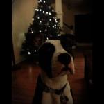 christmas-moof